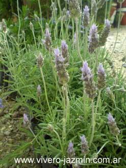 Plantas de exterior - Tipos de plantas de exterior ...